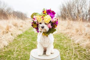ExnerMarshPortraitSession_PetPhotography-4